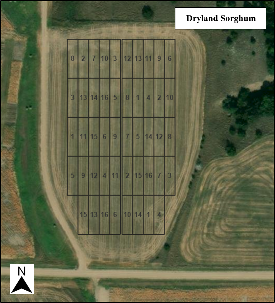 Dryland Sorghum Competition Layouts