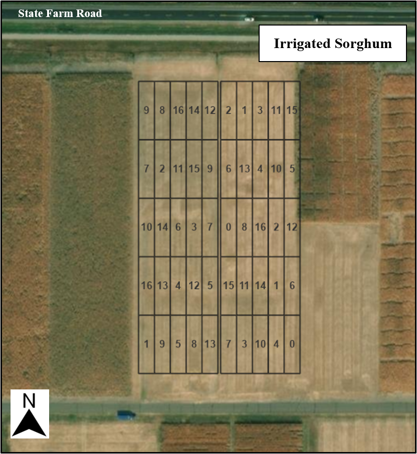 Irrigated Sorghum Competition Layouts